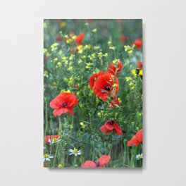 Summer Wild Flowers  Metal Print
