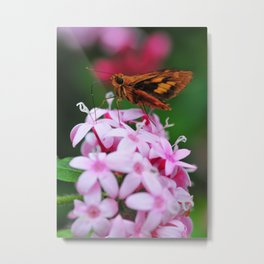 Brown Moth Metal Print