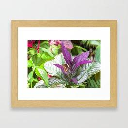 Orange Lacewing Butterfly Framed Art Print