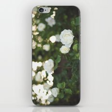 White Roses iPhone & iPod Skin