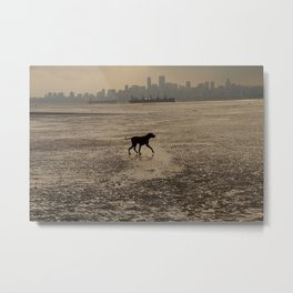 Dog playing at the beach, Vancouver, Canada landscape Metal Print