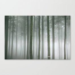 Forest Walk Canvas Print