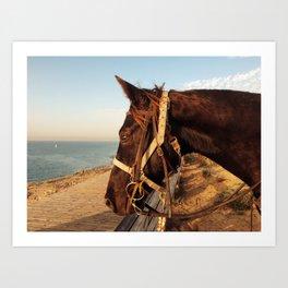 profile of a horse Art Print