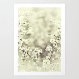 hedge blossoms Art Print
