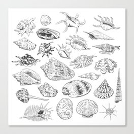collection of sea shells, black contour on white background Canvas Print