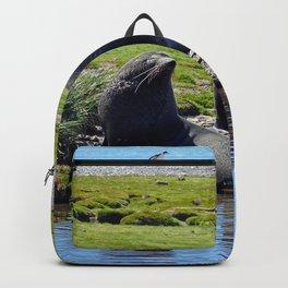 Fur Seals Backpack