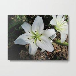 White lilium 2 Metal Print