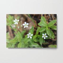 4 Tiny Wildflowers (horizontal) Metal Print