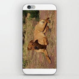 """Born Free"" from the photo series, ""My dog, PLaY-DoH"" iPhone Skin"