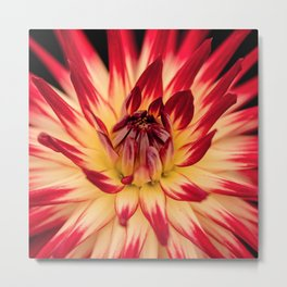 Flower red Metal Print