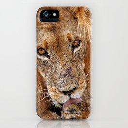 The lion - Africa wildlife iPhone Case