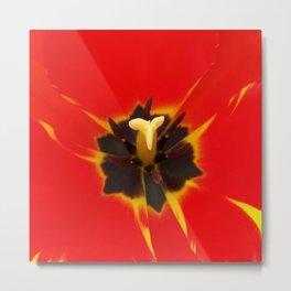 red yellow tulip Metal Print