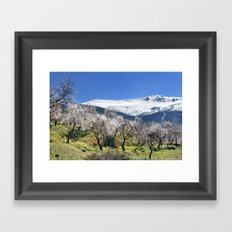 Flowering Almond At The Mountains II Framed Art Print