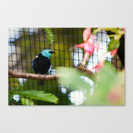 Colorful Bird Canvas Print