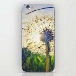 Dandelion Dreamin' iPhone Skin