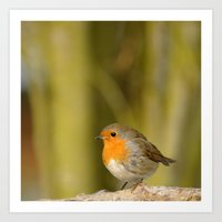 robin Art Prints featuring Robin by Susann Mielke