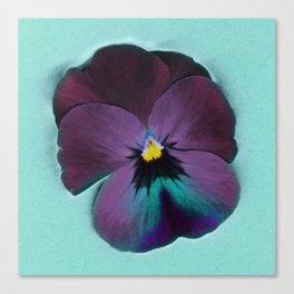 Purple viola tricolor Canvas Print