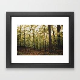 Northern Virginia Forest Framed Art Print