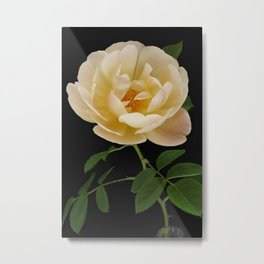 English Roses Collection Metal Print