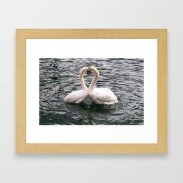 Swan Couple Framed Art Print