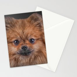 Drawing Dog Pomeranian Spitz Stationery Cards