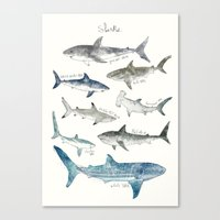 sharks Canvas Prints featuring Sharks by Amy Hamilton