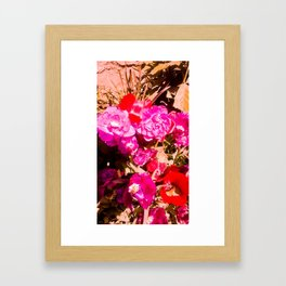 The beauty of the colors. Framed Art Print