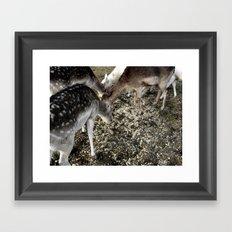 Roe Deer  Framed Art Print