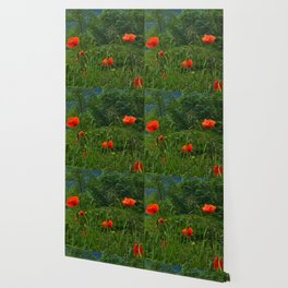 Wild poppies of the Pyrenees mountains Wallpaper