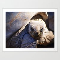 tortoise Art Prints featuring Tortoise by Jenna Boettger Boring