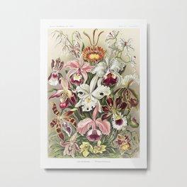 Orchideae-Denusblumen  A Giltsch gem from Kunstformen der Natur (1904) by Ernst Haeckel Metal Print