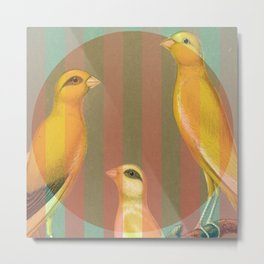 Striped Canaries Metal Print