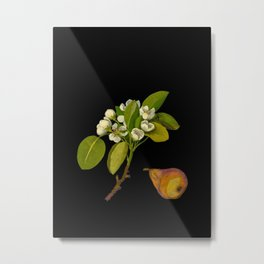 Pyrus Communis Mary Delany Vintage Botanical Floral Collage Delicate Paper Flowers Metal Print
