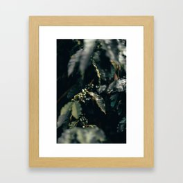 Green Coffee Plant with Beans Framed Art Print