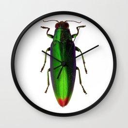 Chrysochroa Fulgidissima Jewel Beetle Wall Clock