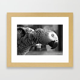 Pretty Bird Framed Art Print