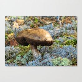 mushroom in swedish forest Canvas Print