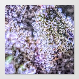 Top Shelf Grand Daddy Purple Close Up Buds Trichomes View Canvas Print