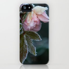 Frost Covered Rose  iPhone Case