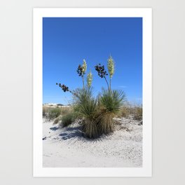 White Sands Dune With Soap Yucca Art Print