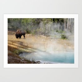 Buffalo at Thermal Pool Art Print