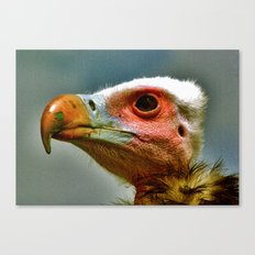 Ethel The Vulture Canvas Print