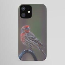 Pretty Bird - House Finch iPhone Case