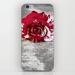 Variegated Rose on Concrete iPhone Skin