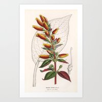 botanical Art Prints featuring Botanical by Connie Goldman