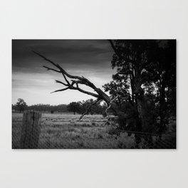 Outback Australia, Gunnedah, NSW, Australia Canvas Print