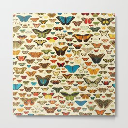 Vintage Colorfull Butterflies Collection Metal Print