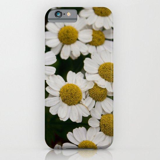 Daisies 1 iPhone & iPod Case