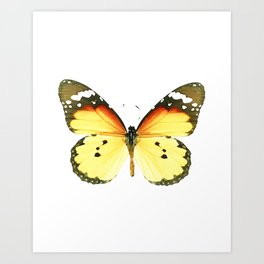 Danaus chrysippus Butterfly Art Print