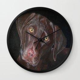 Inquisitive Chocolate Labrador Wall Clock